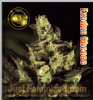Greenhouse Exodus Cheese Fem 5 Ganja Seeds